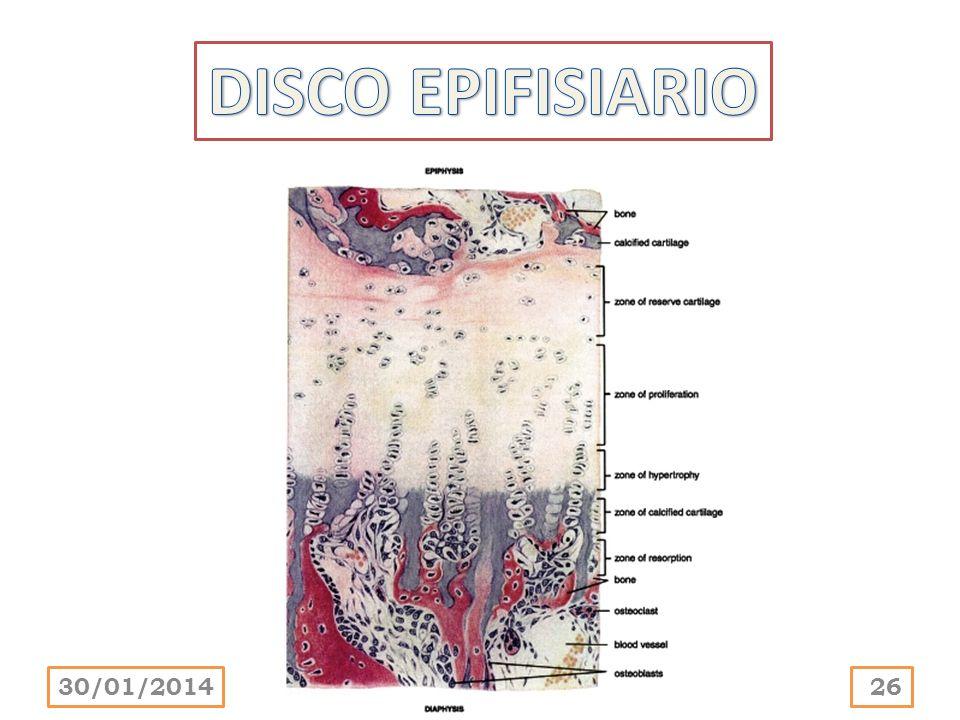 DISCO EPIFISIARIO 24/03/2017