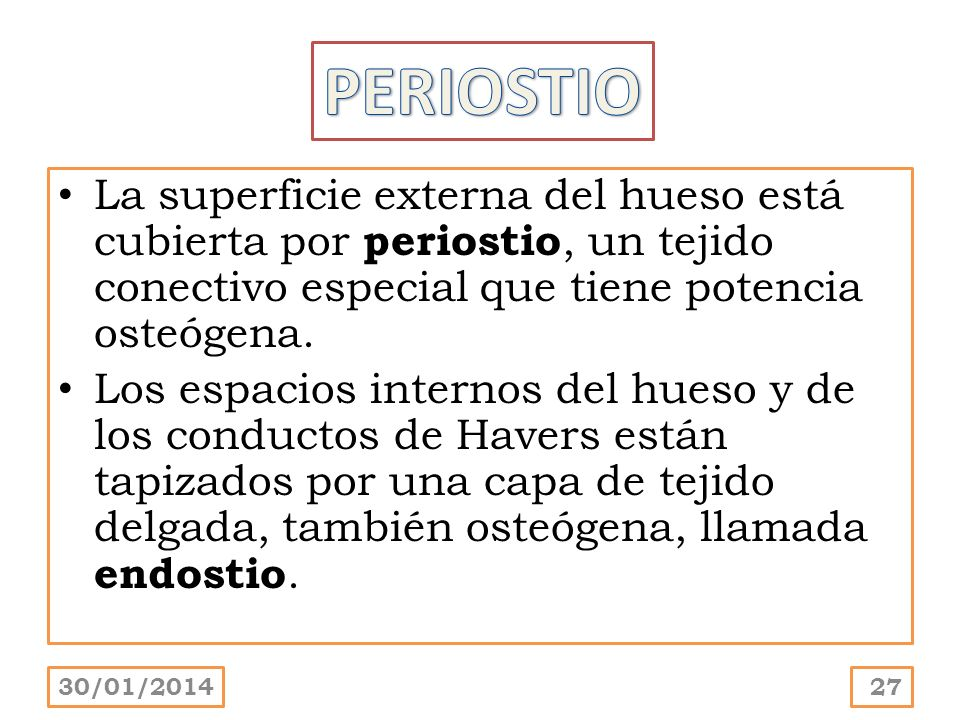 PERIOSTIO La superficie externa del hueso está cubierta por periostio, un tejido conectivo especial que tiene potencia osteógena.
