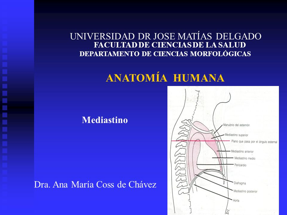ANATOMÍA HUMANA UNIVERSIDAD DR JOSE MATÍAS DELGADO Mediastino