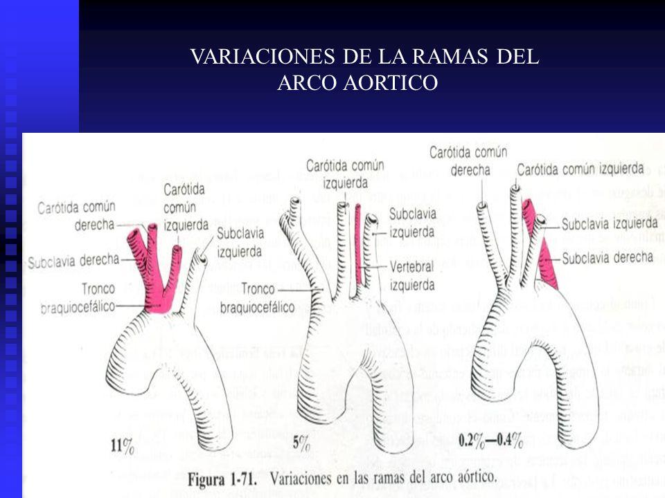 VARIACIONES DE LA RAMAS DEL