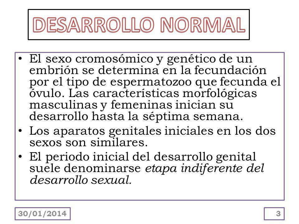 DESARROLLO NORMAL