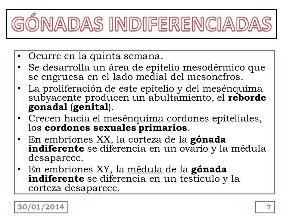 GÓNADAS INDIFERENCIADAS