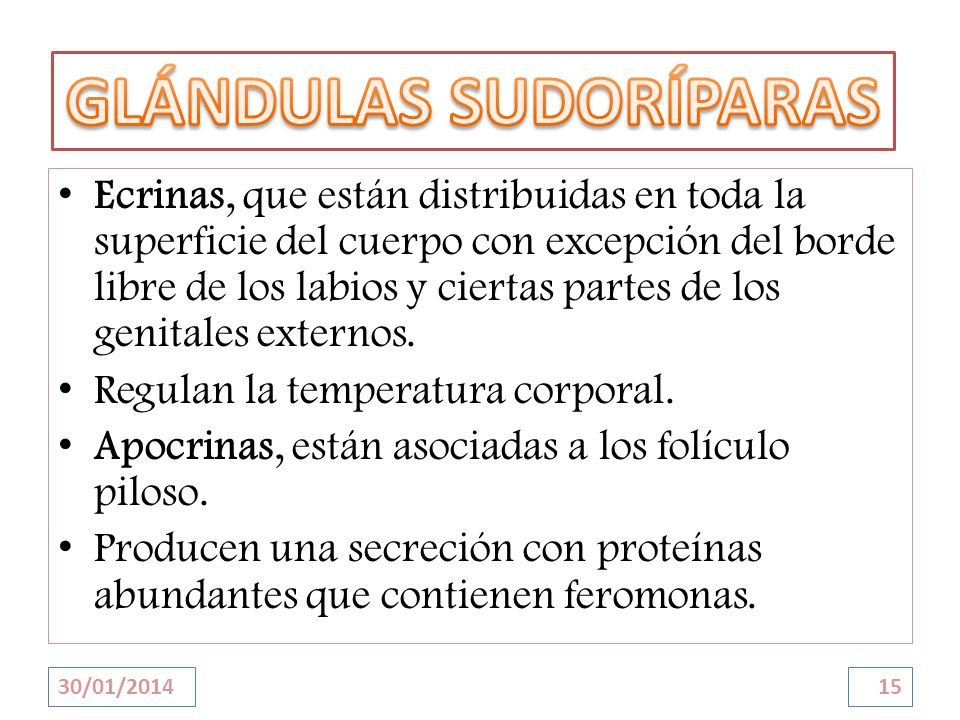 GLÁNDULAS SUDORÍPARAS