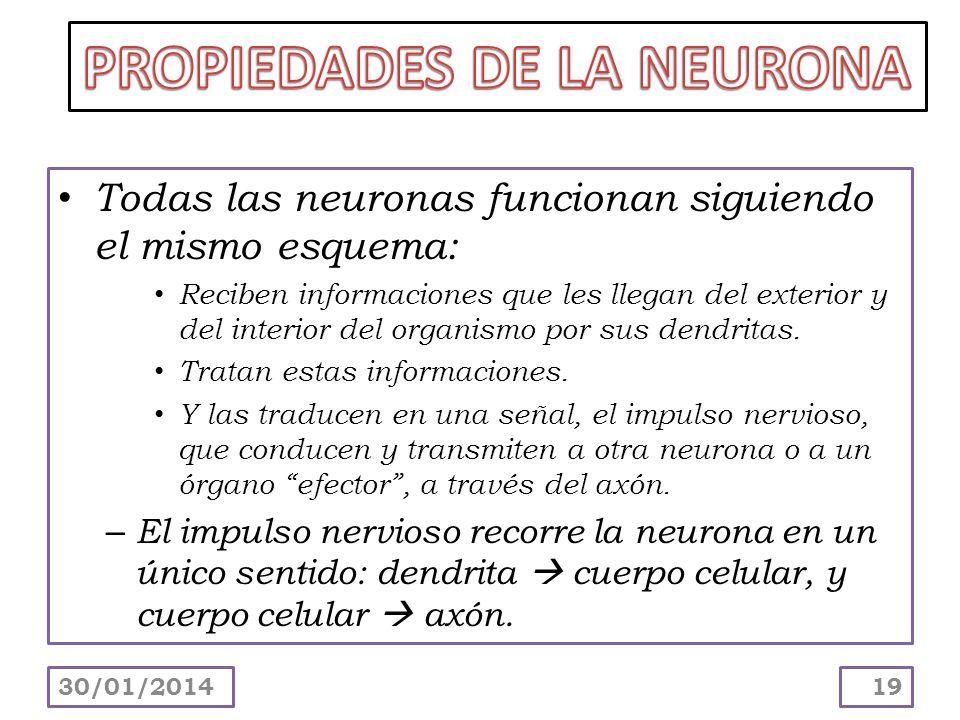 PROPIEDADES DE LA NEURONA
