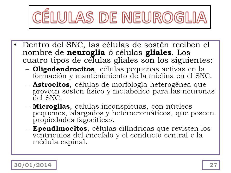CÉLULAS DE NEUROGLIA