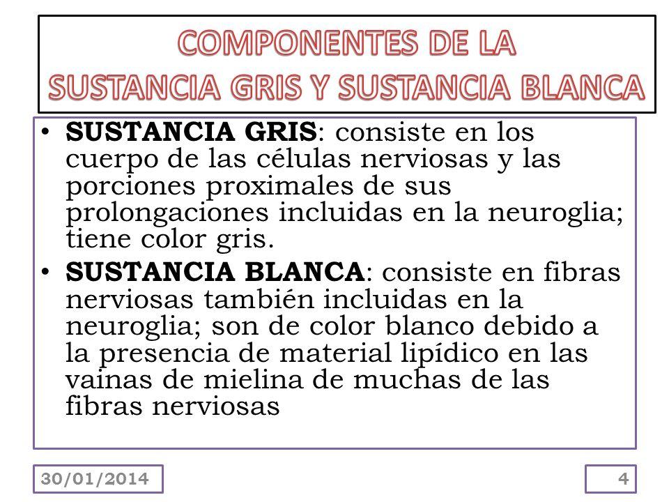 SUSTANCIA GRIS Y SUSTANCIA BLANCA
