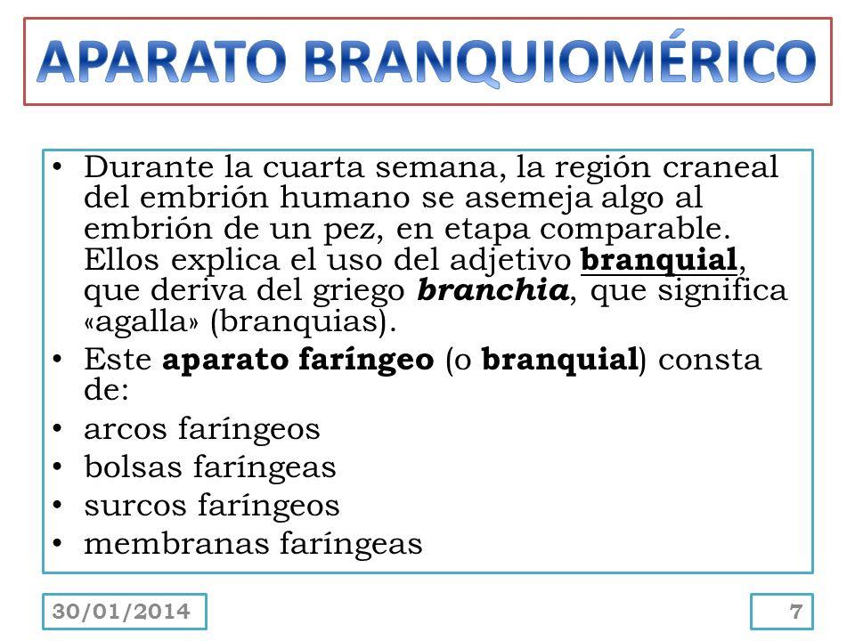 APARATO BRANQUIOMÉRICO