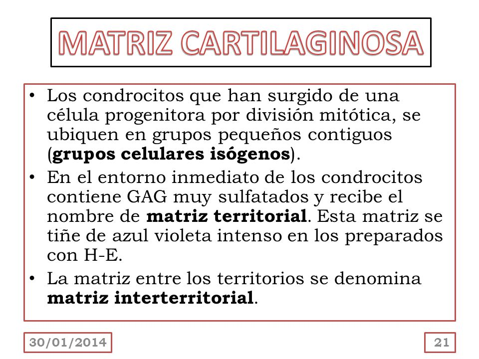 MATRIZ CARTILAGINOSA