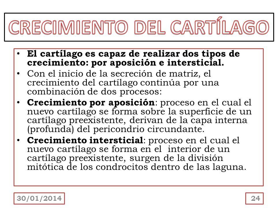 CRECIMIENTO DEL CARTÍLAGO