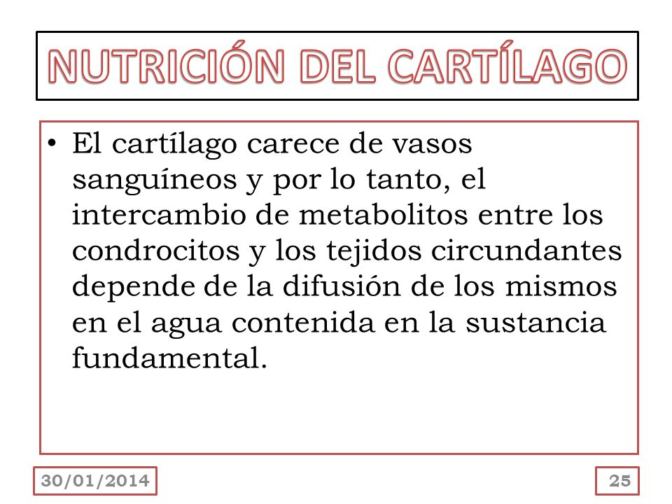 NUTRICIÓN DEL CARTÍLAGO