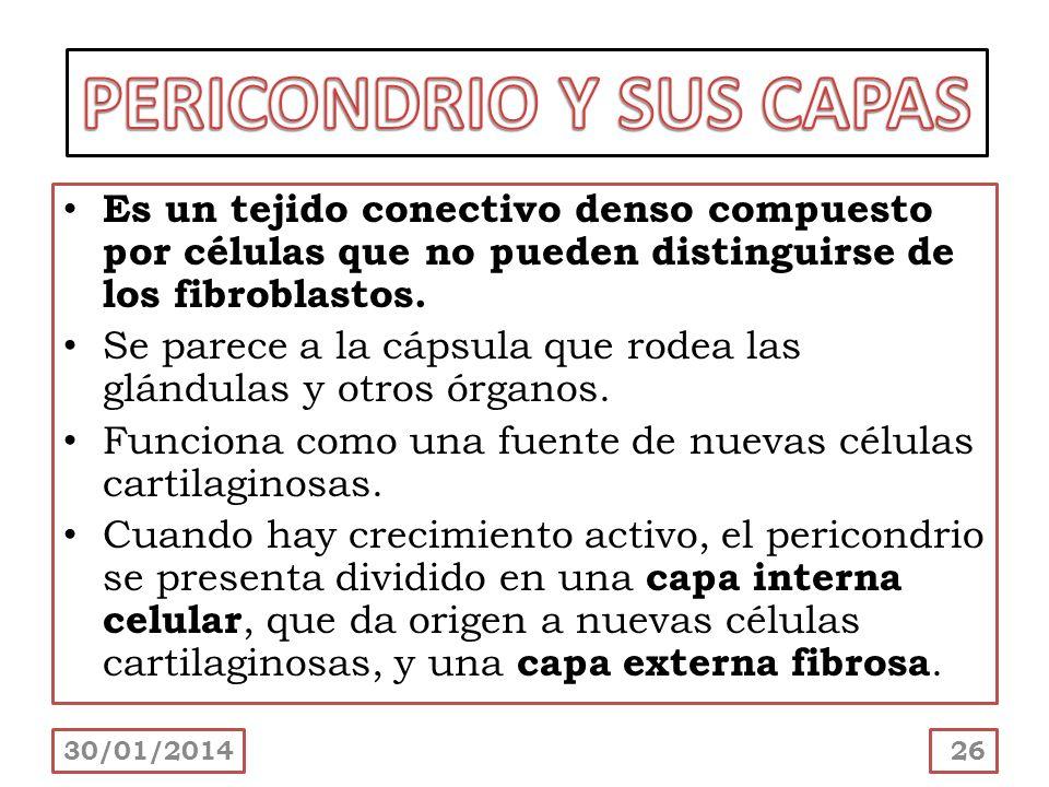PERICONDRIO Y SUS CAPAS