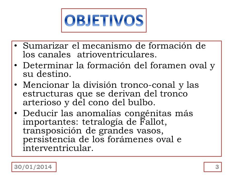 OBJETIVOS Sumarizar el mecanismo de formación de los canales atrioventriculares. Determinar la formación del foramen oval y su destino.