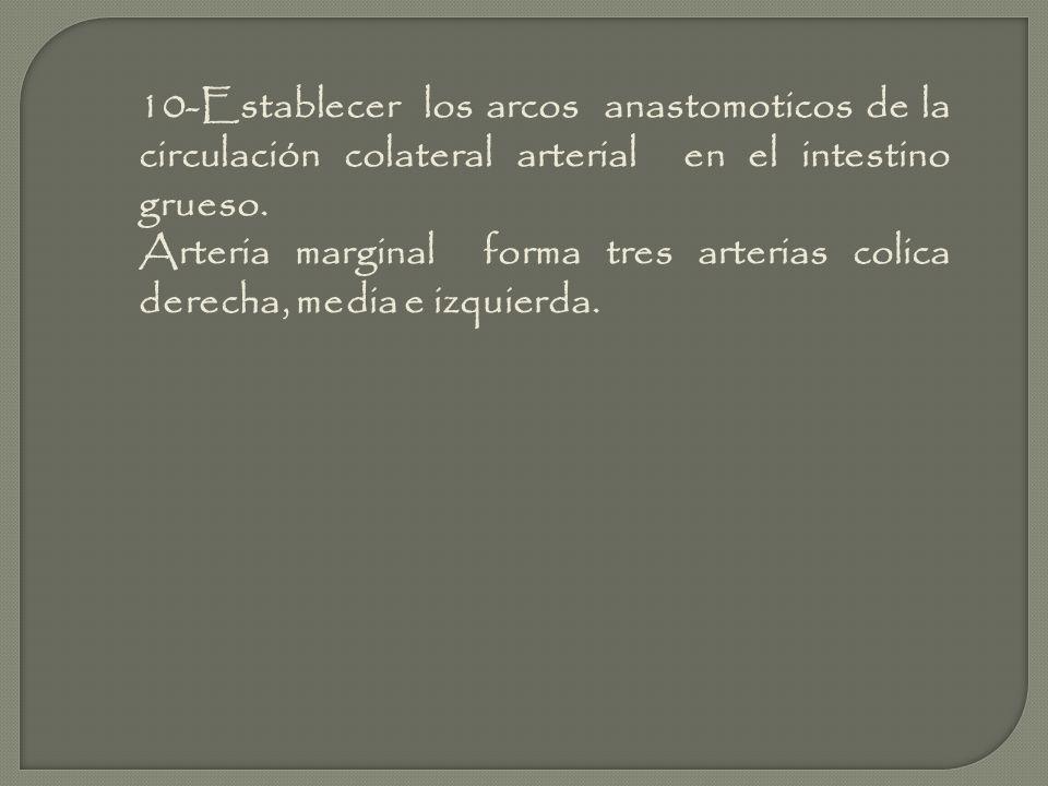 10-Establecer los arcos anastomoticos de la circulación colateral arterial en el intestino grueso.