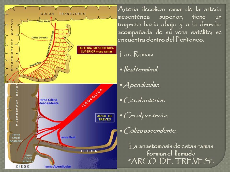 La anastomosis de estas ramas
