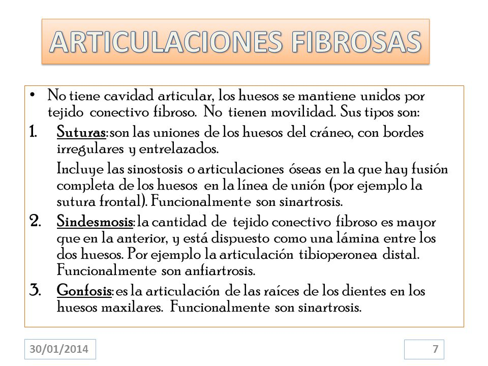 ARTICULACIONES FIBROSAS