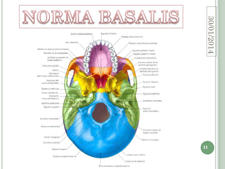 NORMA BASALIS 24/03/2017