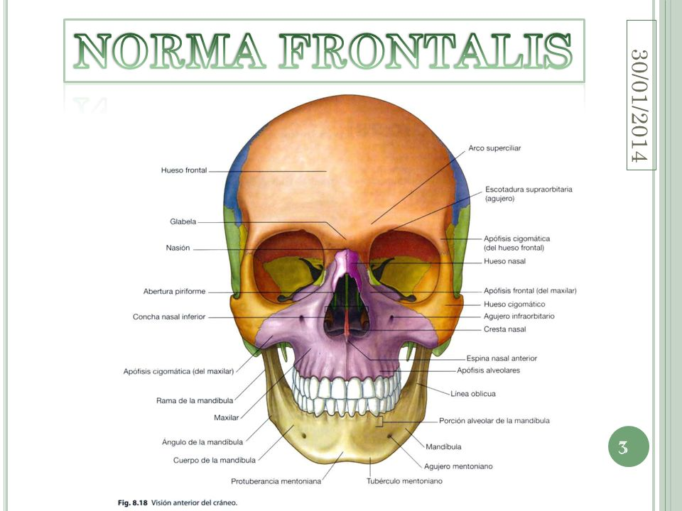 NORMA FRONTALIS 24/03/2017