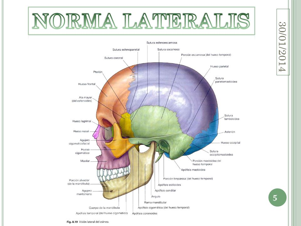 NORMA LATERALIS 24/03/2017