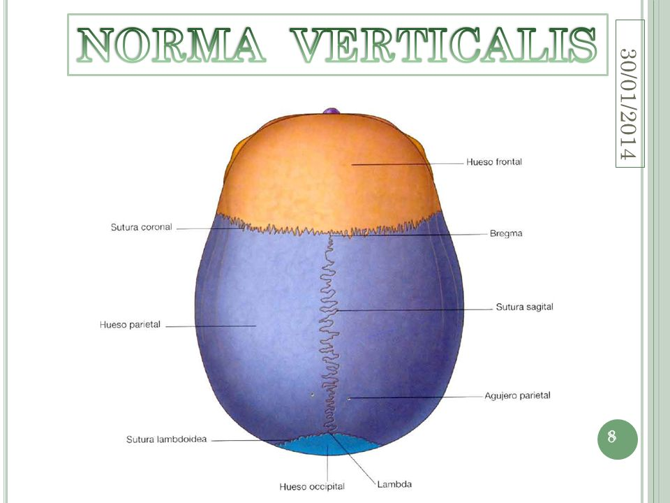 NORMA VERTICALIS 24/03/2017