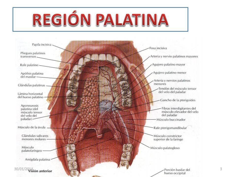 REGIÓN PALATINA 24/03/2017