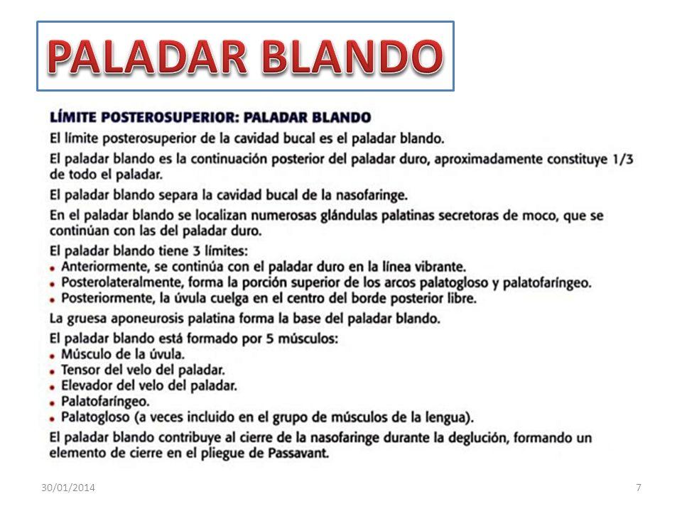 PALADAR BLANDO 24/03/2017
