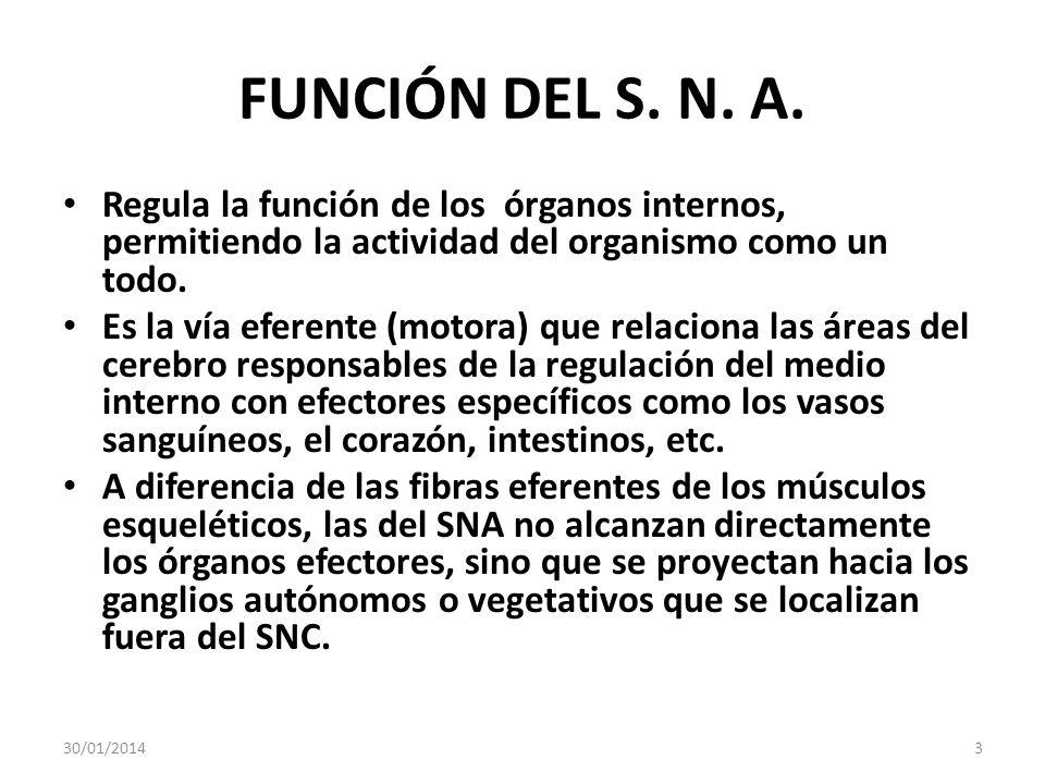 FUNCIÓN DEL S. N. A. Regula la función de los órganos internos, permitiendo la actividad del organismo como un todo.