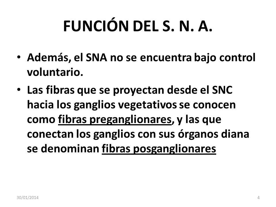 FUNCIÓN DEL S. N. A. Además, el SNA no se encuentra bajo control voluntario.