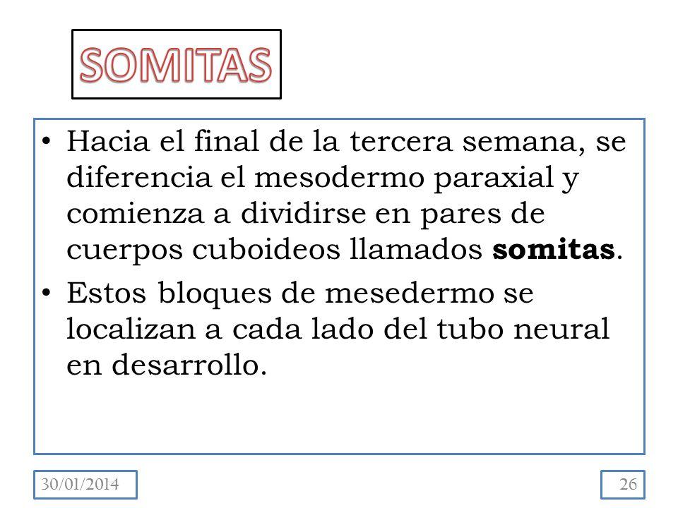 SOMITAS