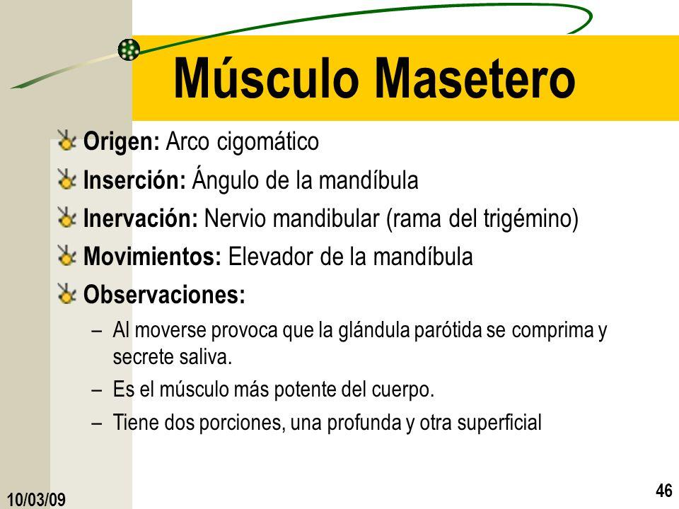 Músculo Masetero Origen: Arco cigomático