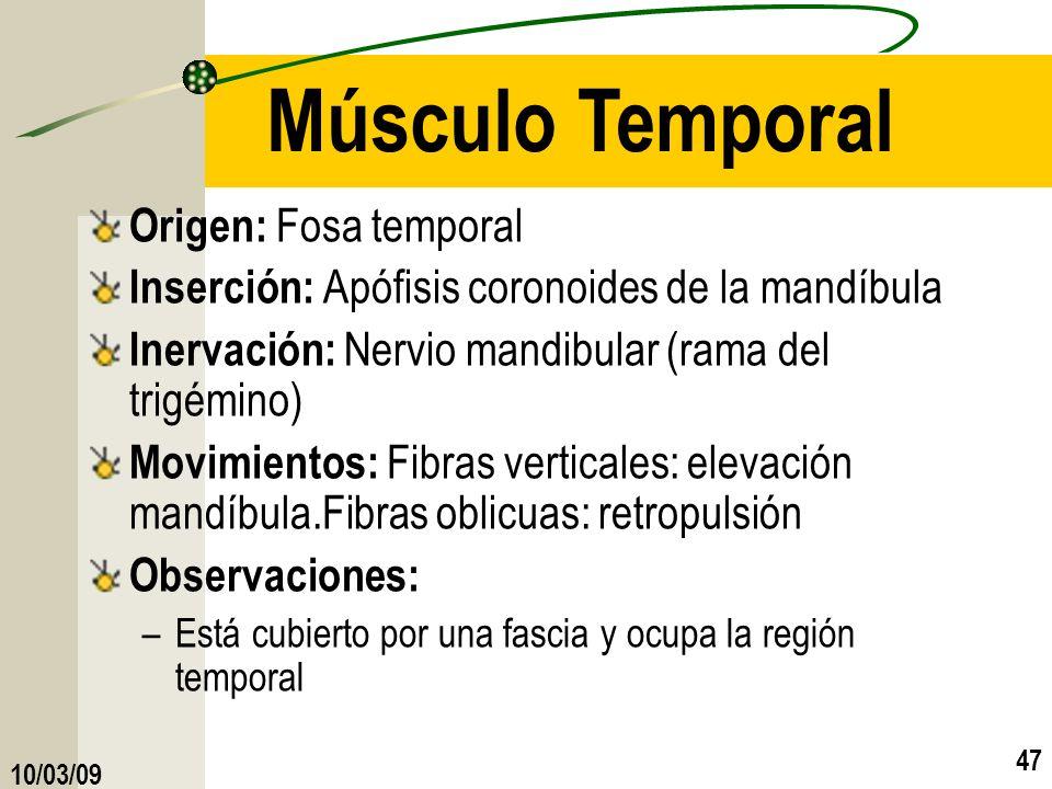 Músculo Temporal Origen: Fosa temporal
