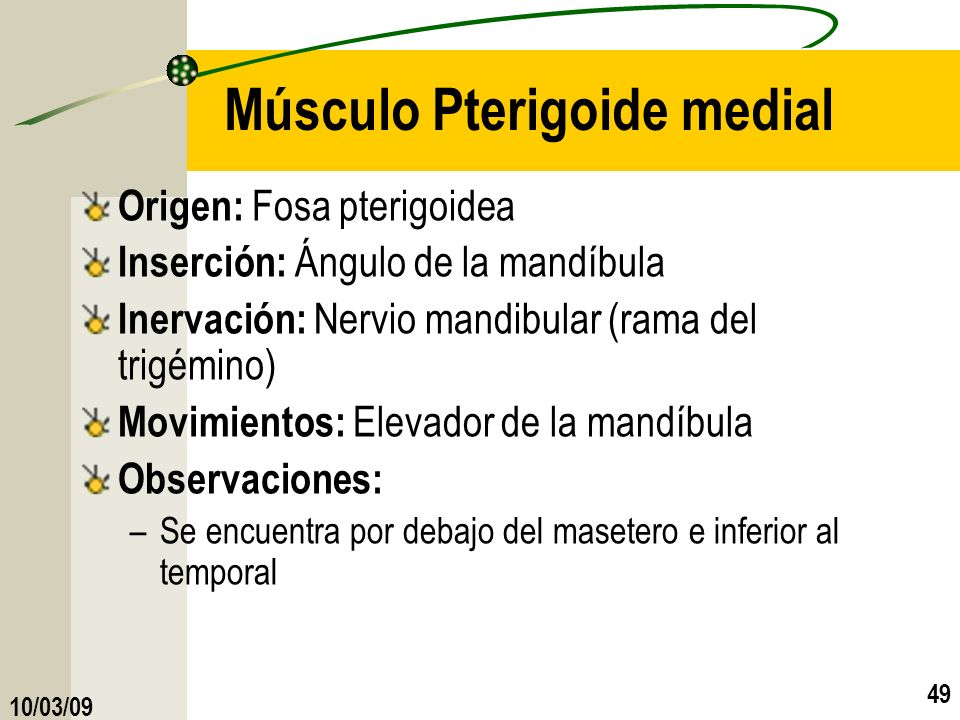 Músculo Pterigoide medial