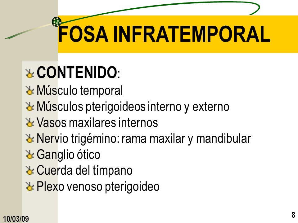 FOSA INFRATEMPORAL CONTENIDO: Músculo temporal