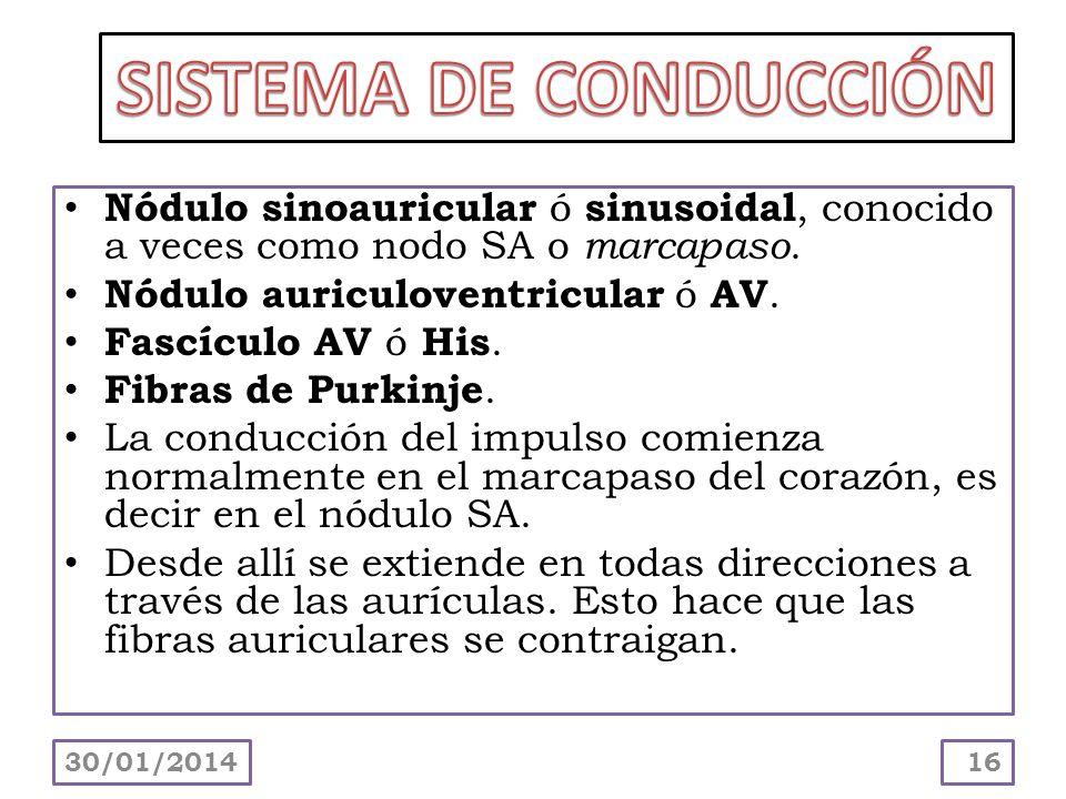 SISTEMA DE CONDUCCIÓNNódulo sinoauricular ó sinusoidal, conocido a veces como nodo SA o marcapaso. Nódulo auriculoventricular ó AV.