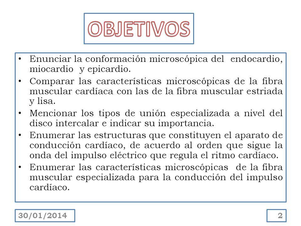 OBJETIVOS Enunciar la conformación microscópica del endocardio, miocardio y epicardio.