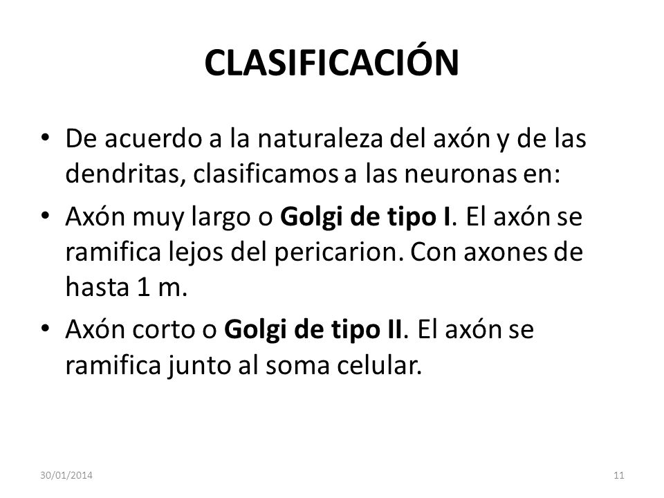 CLASIFICACIÓNDe acuerdo a la naturaleza del axón y de las dendritas, clasificamos a las neuronas en: