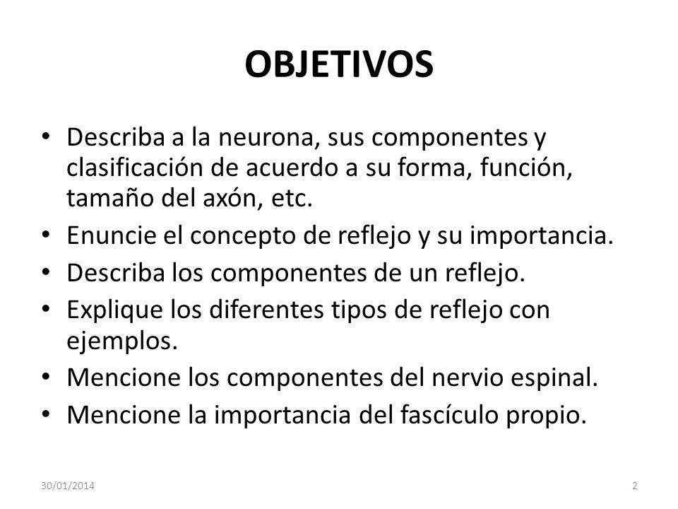 OBJETIVOS Describa a la neurona, sus componentes y clasificación de acuerdo a su forma, función, tamaño del axón, etc.