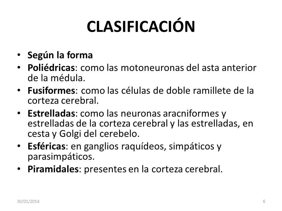 CLASIFICACIÓN Según la forma