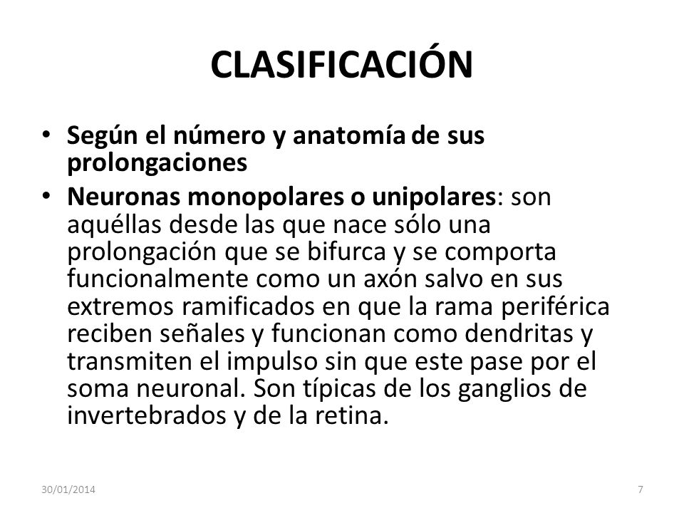 CLASIFICACIÓN Según el número y anatomía de sus prolongaciones