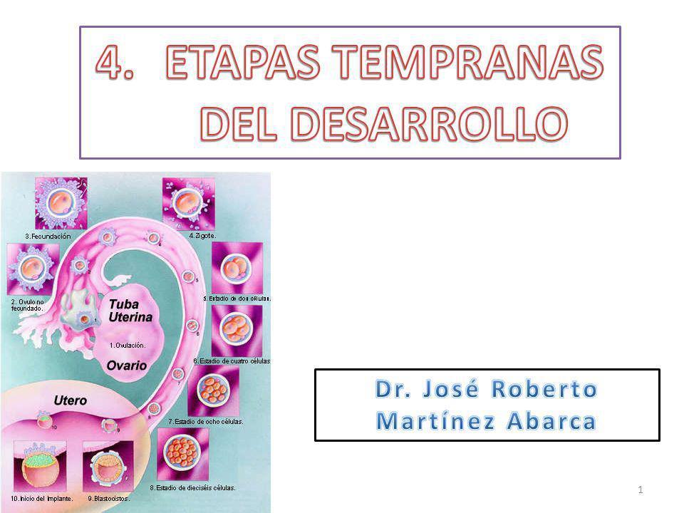 ETAPAS TEMPRANAS DEL DESARROLLO Dr. José Roberto Martínez Abarca