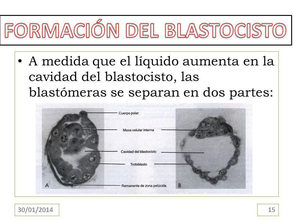 FORMACIÓN DEL BLASTOCISTO