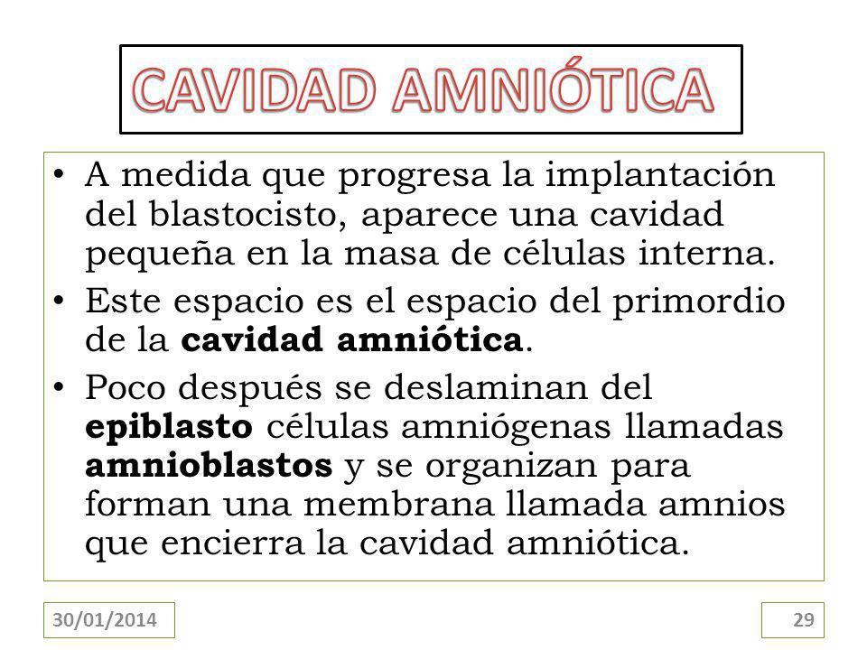 CAVIDAD AMNIÓTICA A medida que progresa la implantación del blastocisto, aparece una cavidad pequeña en la masa de células interna.