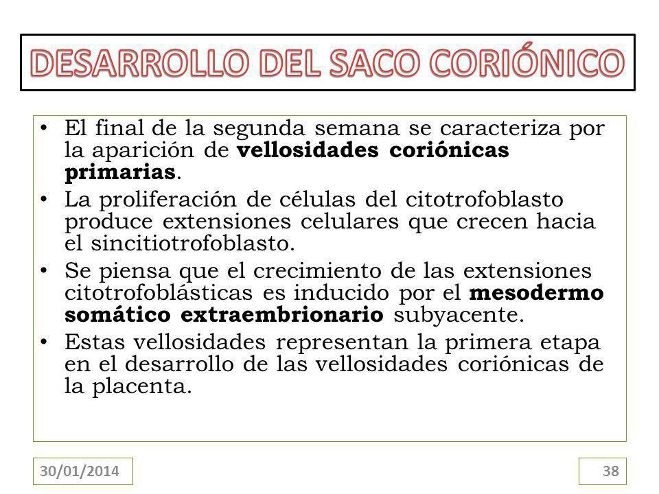DESARROLLO DEL SACO CORIÓNICO