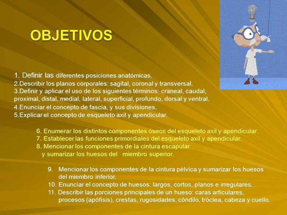 OBJETIVOS 1. Definir las diferentes posiciones anatómicas.