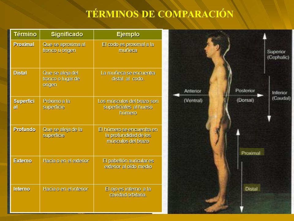 TÉRMINOS DE COMPARACIÓN