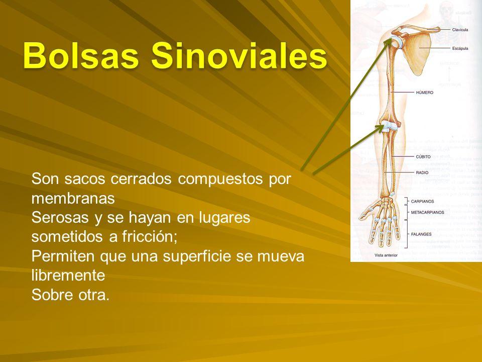 Bolsas Sinoviales Son sacos cerrados compuestos por membranas