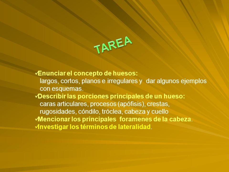 TAREA Enunciar el concepto de huesos: