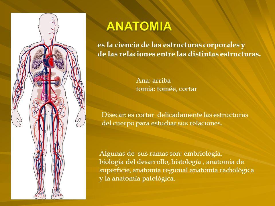 ANATOMIA es la ciencia de las estructuras corporales y