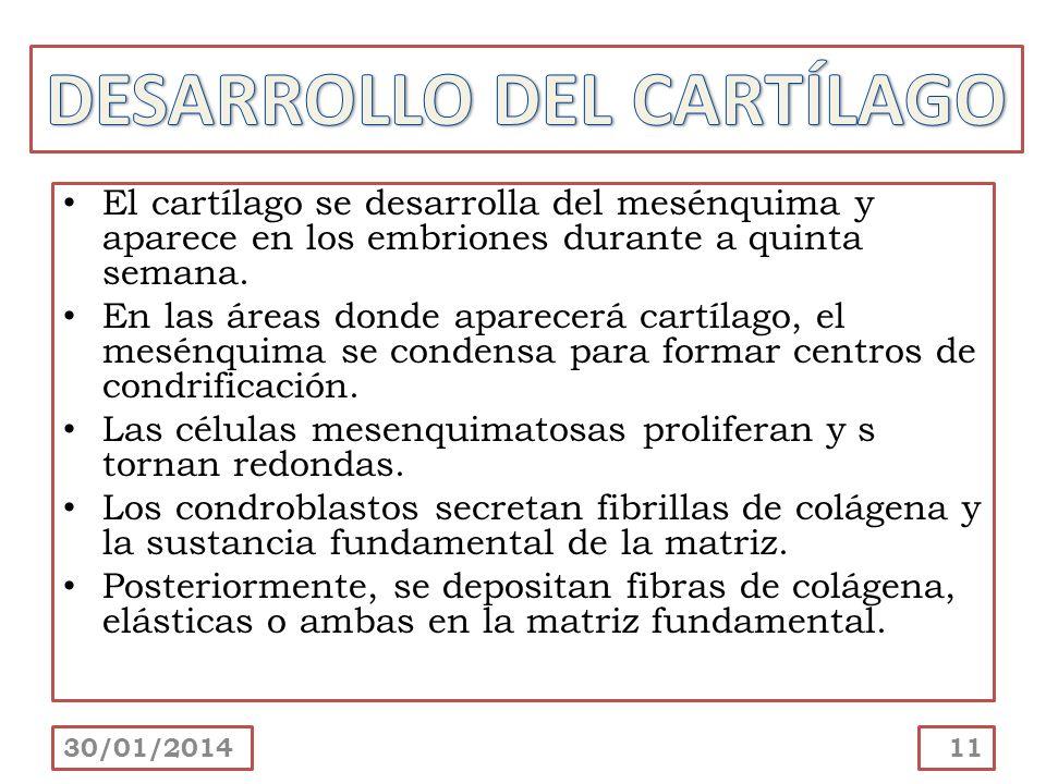 DESARROLLO DEL CARTÍLAGO