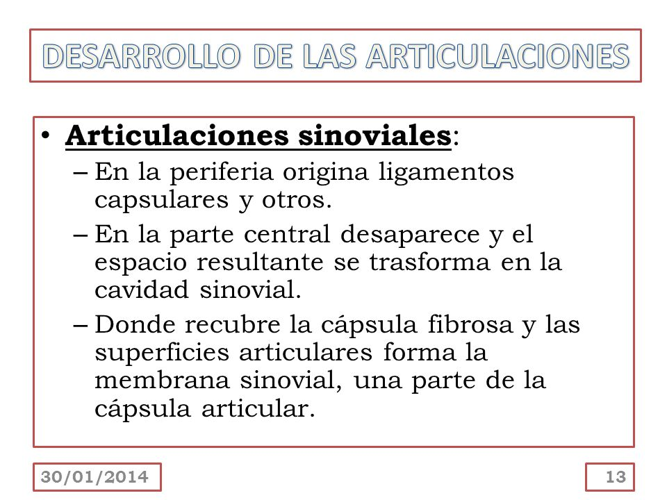 DESARROLLO DE LAS ARTICULACIONES