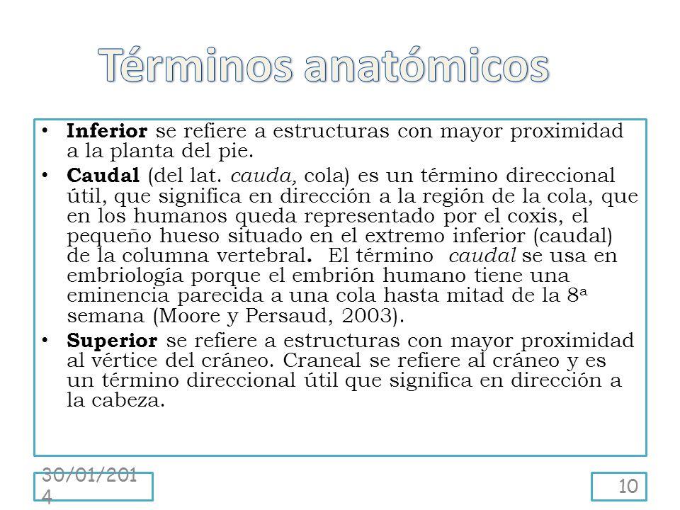5 t rminos y posiciones anat micas dr jos roberto for En 2003 se completo la secuenciacion del humano